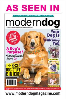 Modern-dog-cover-winter-2016