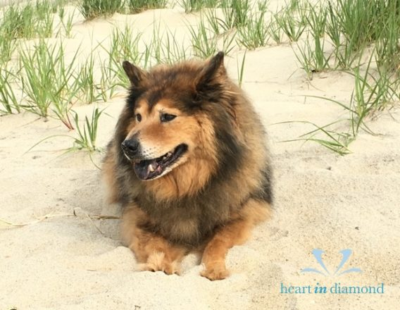 Pixie-dog-pet-memo